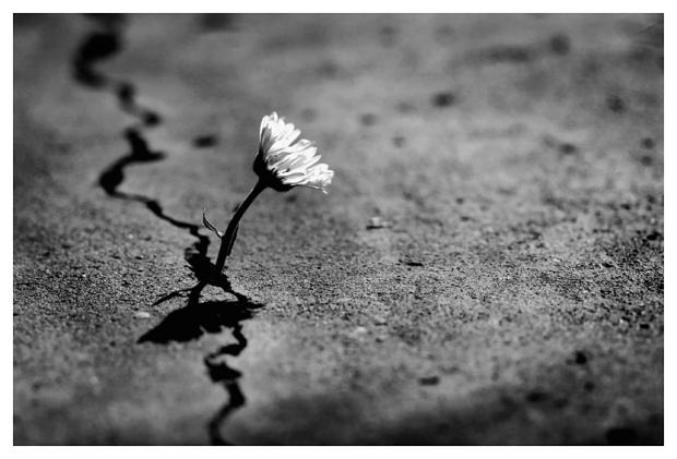 poeta flor