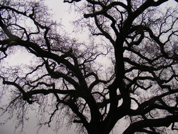 Branches_on_a_rainy_day