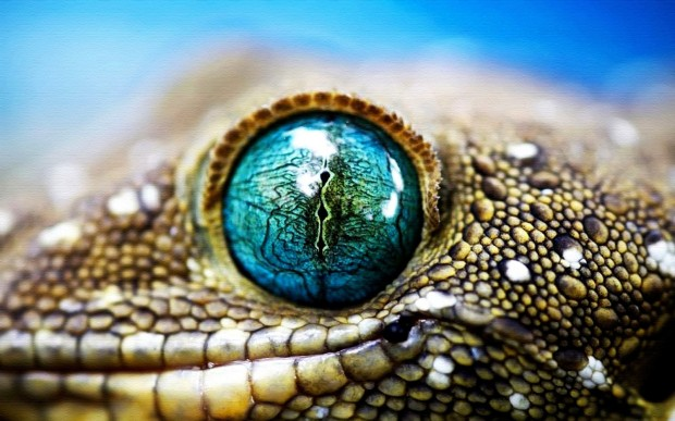 Lizard-Eye-HD