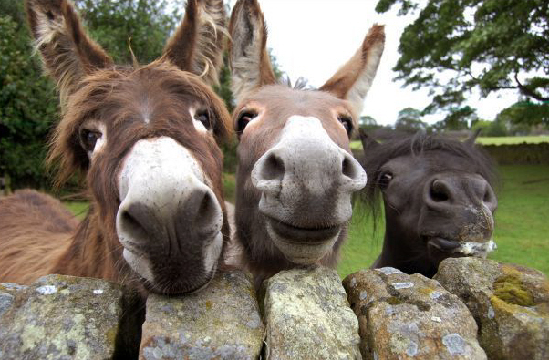 mule-friends
