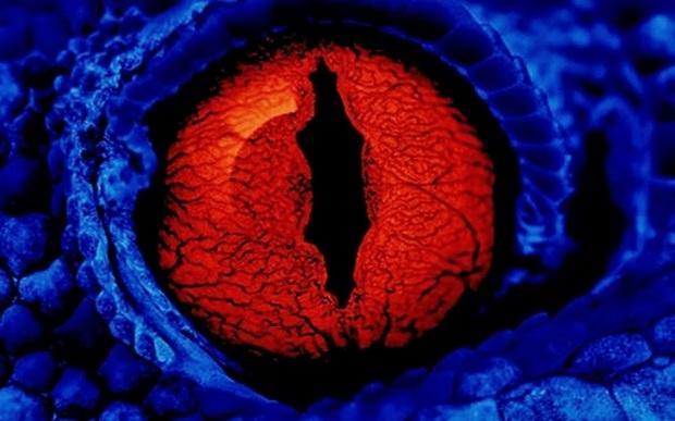 Red_Lizard_Eye