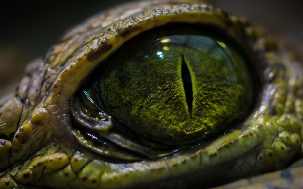 reptile green eyes